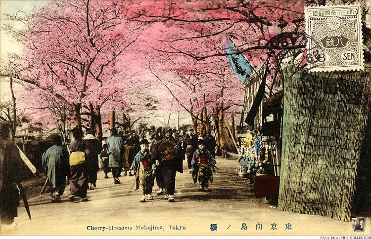 東京向島ノ櫻