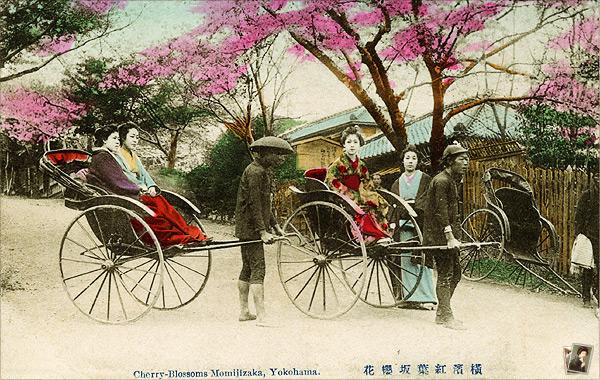 横浜紅葉坂櫻花